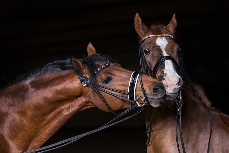 Stallmatten für Pferd